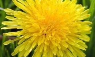 10 Квітів, які можна їсти