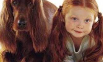 10-Літні діти краще за всіх розуміють собак, з`ясували вчені