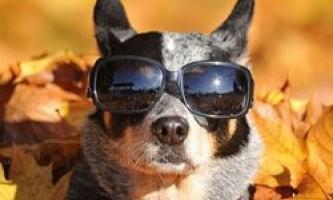10 Кращих собак середнього розміру