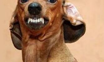 10 Несподівано небезпечних порід собак
