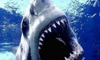 10 Самих страшних акул