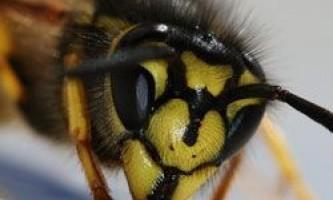 10 Смертельно небезпечних комах планети