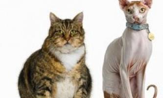 10 Рад для тих, хто хоче завести кішку