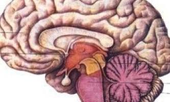 10 Речей, які наша нервова система робить автоматично