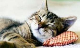 20 Цікавих фактів про кішок