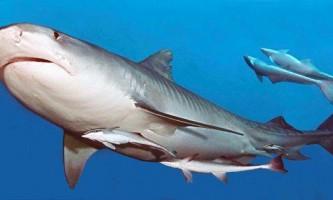 5 Дивних фактів, які ви не знали про акул