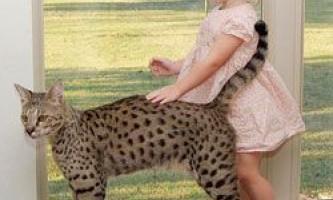 5 Тварин, які зобов`язані своїм існуванням людині