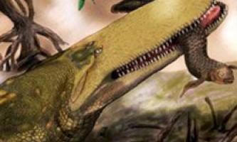 6 Дивних тварин, відкритих в музеях