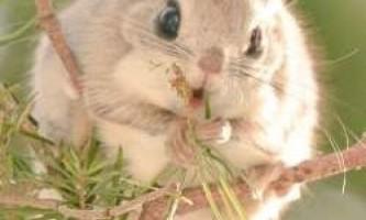 7 Самих милих тварин, що мешкають тільки на острові хоккайдо