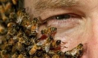 Апітерапія (лікування бджолами)