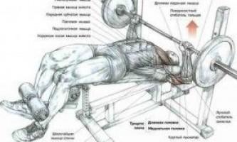 Базові вправи в бодібілдингу: секрети і нагадування