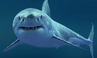 Білі акули австралії генетично різні