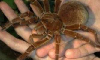 Боязнь павуків: причини фобії