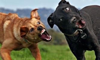 Бійцівські породи собак - список