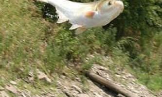 Більшість риб еволюціонували не в морській воді