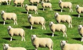 Бразилія планує почати клонування рідкісних тварин