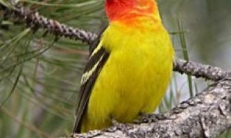 Людина змушує птахів мігрувати, виробляючи багато шуму
