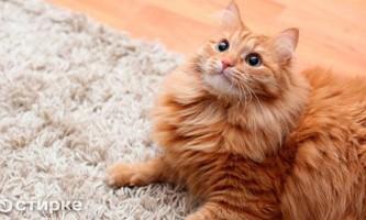 Чим можна видалити запах котячої сечі з килима