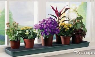 Чим небезпечні мошки на квітах і як з ними боротися