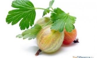 Чим відрізняється ягода від овочів?
