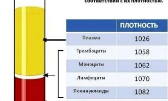 Чим відрізняється кров від плазми?