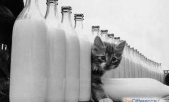 Чим відрізняється пастеризоване молоко від стерилізованого?