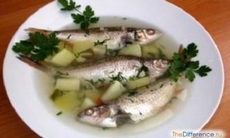 Чим відрізняється вуха від рибного супу?