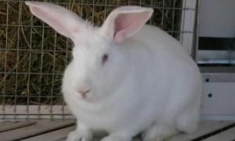 Чим відрізняється заєць від кролика?