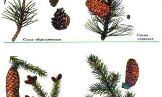 Чим відрізняються голонасінні від папоротей?