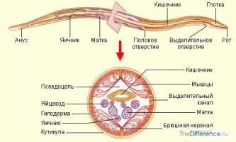 Чим відрізняються кільчасті черви від круглих черв`яків?