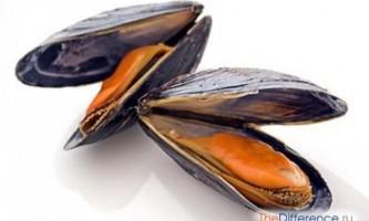 Чим відрізняються мідії від устриць?
