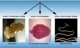 Чим відрізняються молюски від черв`яків?