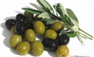 Чим відрізняються оливки від маслин?