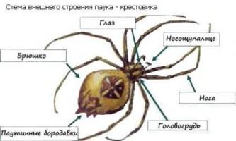 Чим відрізняються павуки від комах?