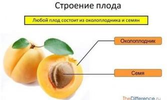 Чим відрізняються плоди від насіння?