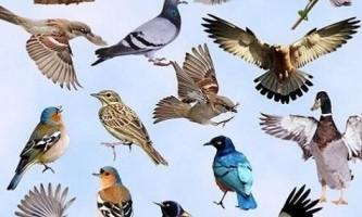 Чим відрізняються птиці один від одного?