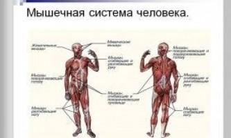 Чергування вправ для збільшення сили і м`язової маси