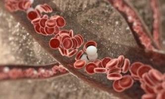 Що робити для підтримки необхідного складу крові