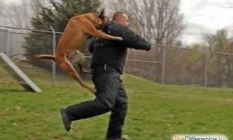 Що робити, якщо напала собака?