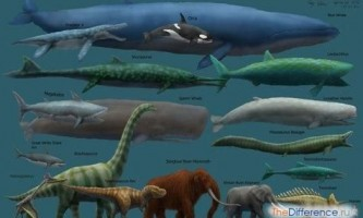 Що їдять кити?