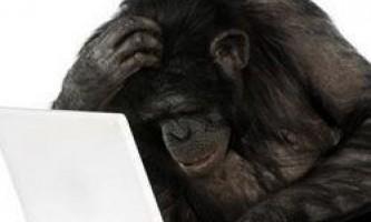 Що може дати комп`ютер мавпам?