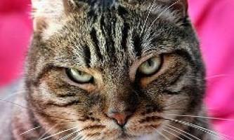 Що ваша кішка думає про вас?