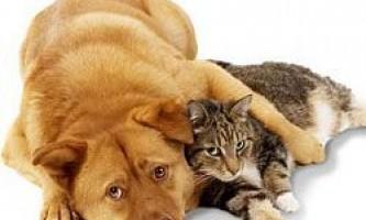 Домашні тварини переносять небезпечні захворювання