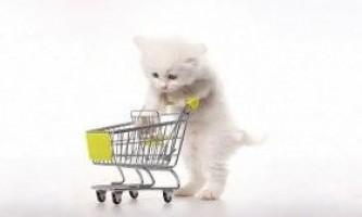 Дресирування кішок в домашніх умовах