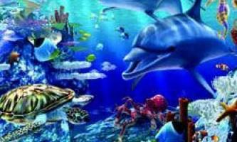 Дві третини морських мешканців не відомі науці