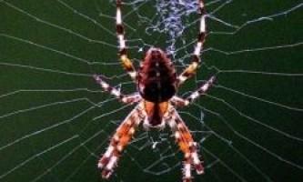 Форма лап і колір павуків лякає людей