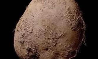 Фотографію картоплі продали за 1 мільйон доларів