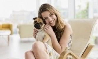 Гіпоалергенні породи собак