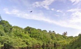 Google street view проник в тропічні ліси амазонки