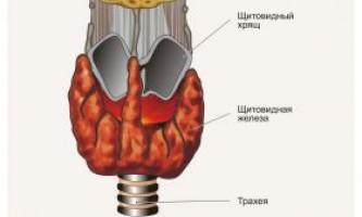 Гормони щитовидної залози для сушки в бодібілдингу